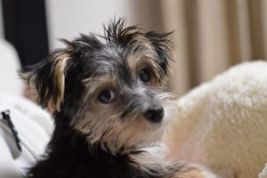 愛犬「ノエル」1